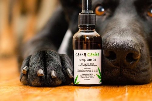 Cbd Oil For Dog